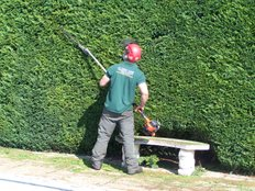 Hedge trimming southampton