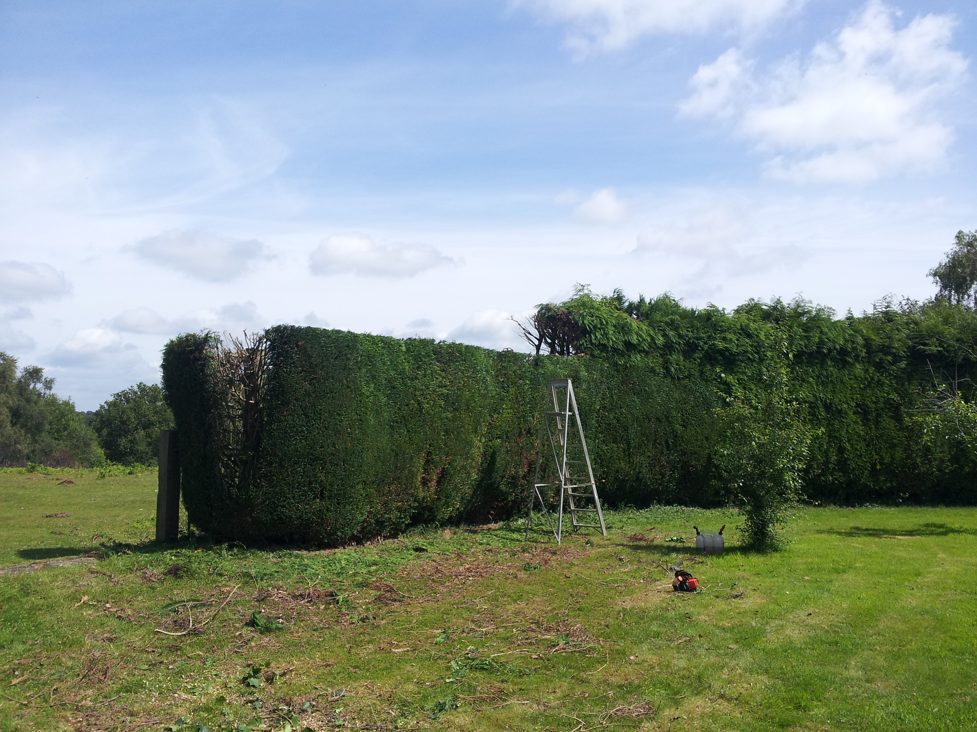Hedge Topping Southampton