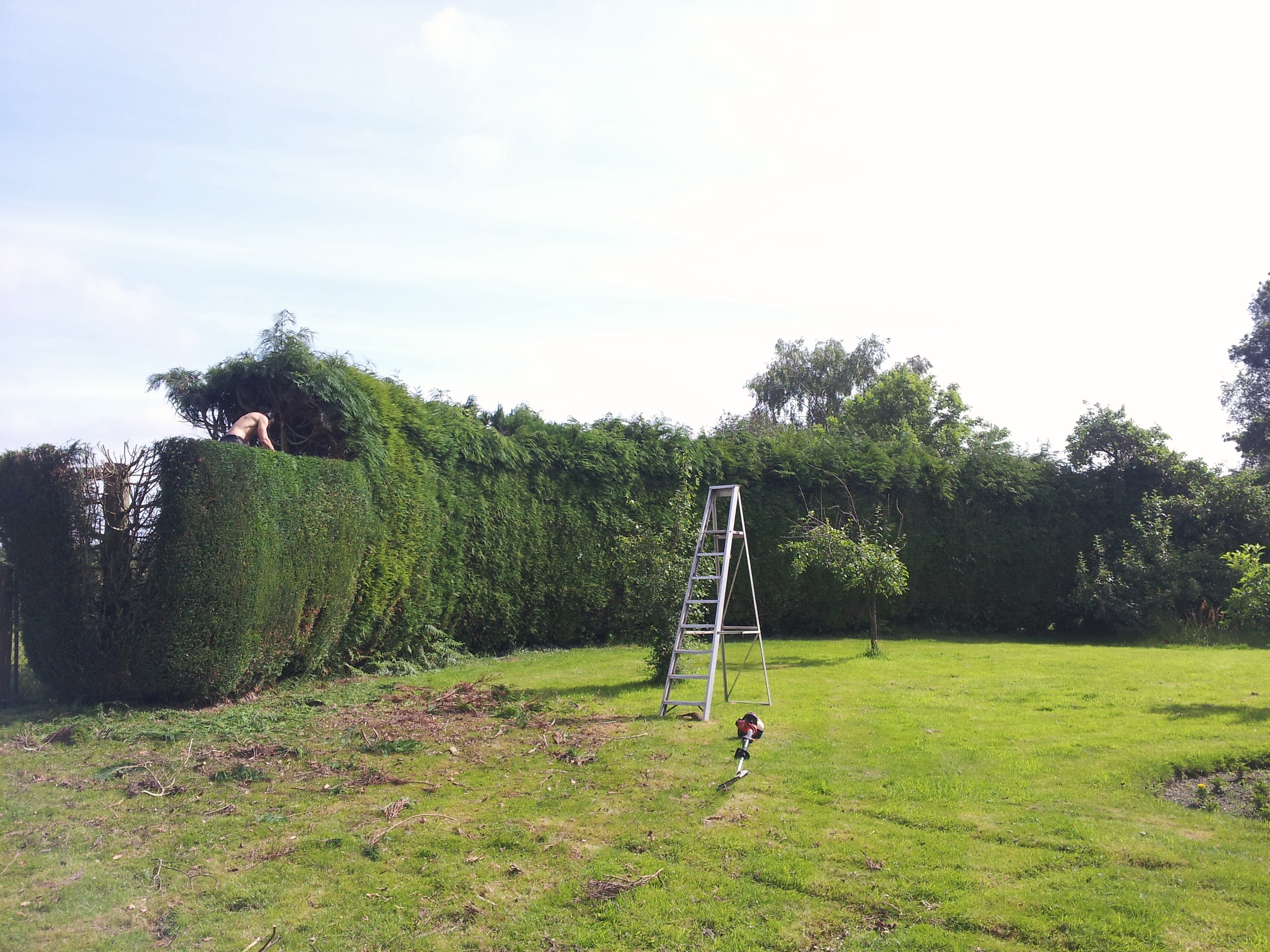 Hedge Cutting Totton