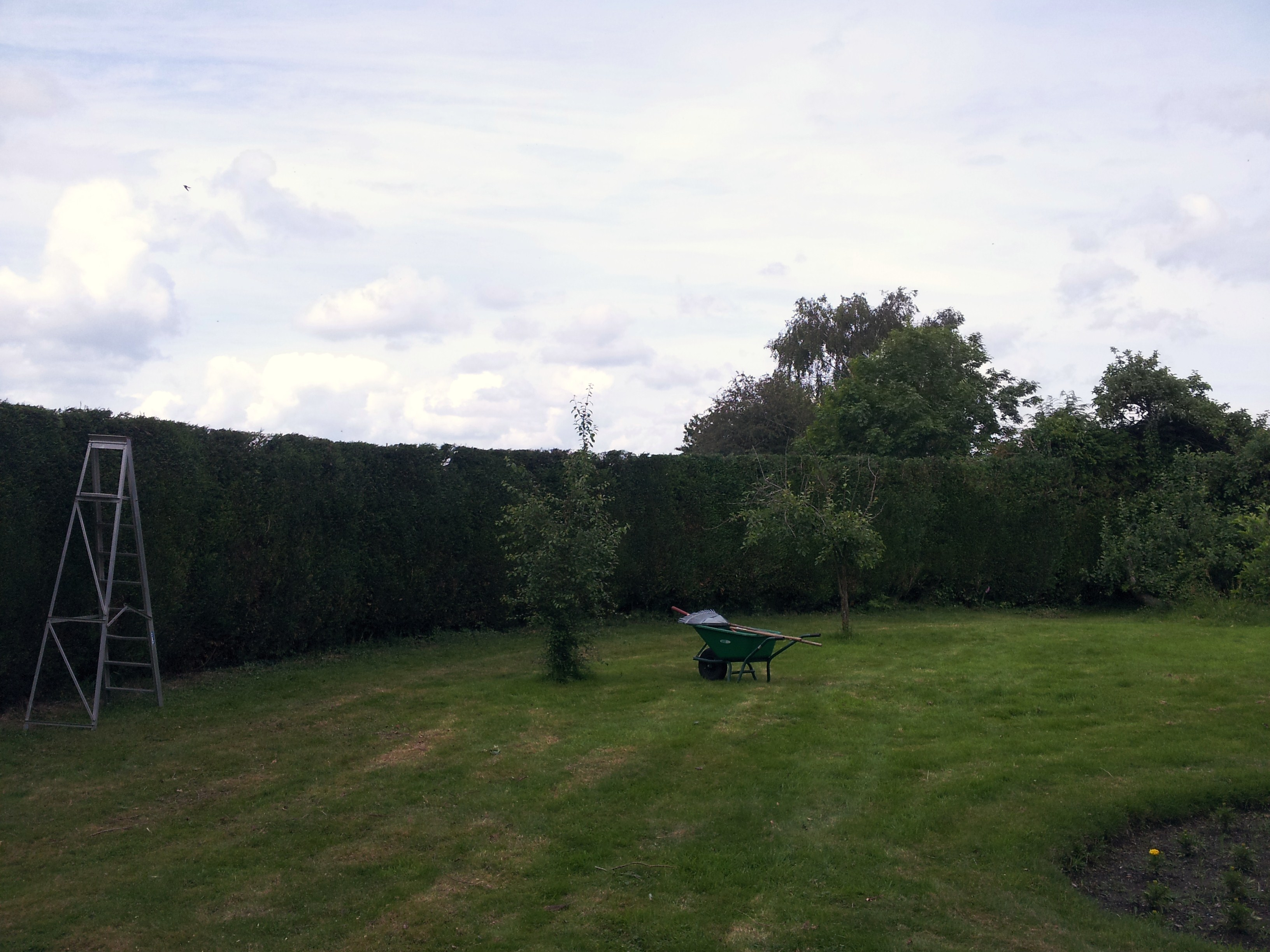 Tree Surgeon Southampton Hedge Topping